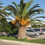 prílet do Alghera