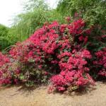 botanická záhrada Koko Crater