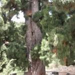 Obrovský strom