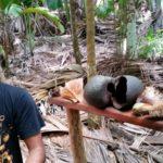 Sprievodca a vylupnutý kokos