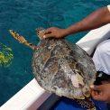 Mladá korytnačka