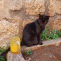 Mačka v Kotore